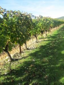 Vignes de Montcalmès
